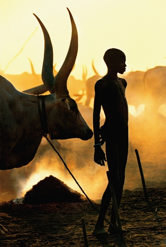 Dinka Boy with Namesake Ox, South Sudan by Carol Beckwith and Angela Fisher