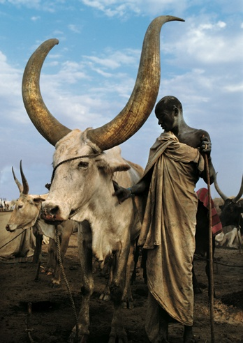 Robed Dinka Elder with Namesake Ox, South Sudan by Carol Beckwith and Angela Fisher