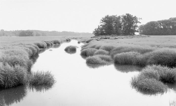 Bright Mist on the Marsh by Dorothy Kerper Monnelly