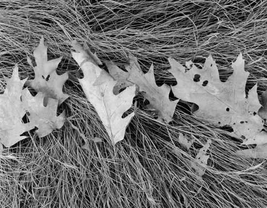Oak Leaves and Salt Hay by Dorothy Kerper Monnelly