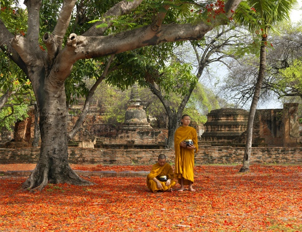 Beneath the Flowering Tree, Ayutthaya by Lisa Kristine