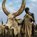 Robed Dinka Elder with Namesake Ox, South Sudan