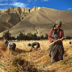 Harvest Woman and Men, Ghemi